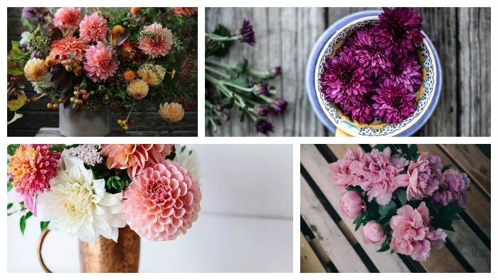collage-flores-2-abcserrano
