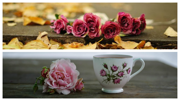 collage-flores-6-abcserrano